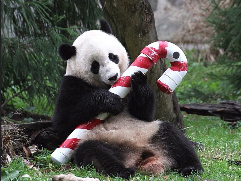 Excellent réveillon et Joyeux Noël!